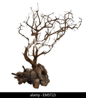 Dried Tree With Roots - Stock Photo