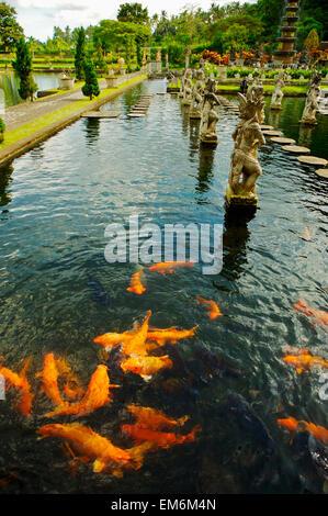 Indonesia, Bali, Koi Fish In Pond; Karangasem, Tirtagangga Water Palace Gardens - Stock Photo