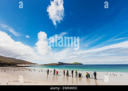Sea,Penguins,Falkland Islands,New Island - Stock Photo