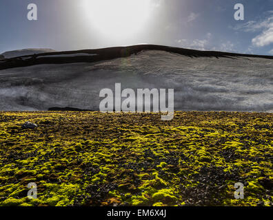 moss and snow, Deception Island, Antarctica - Stock Photo
