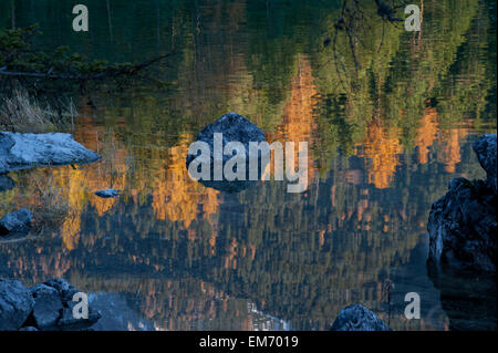 reflection of conifers and larches in Fall color - Stock Photo