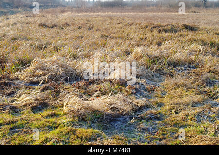 dried grass on a field at the early spring sunny day - Stock Photo