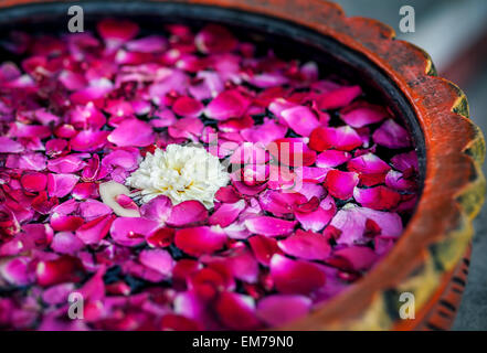 White flower with red rose petals in the bowl in SPA salon - Stock Photo