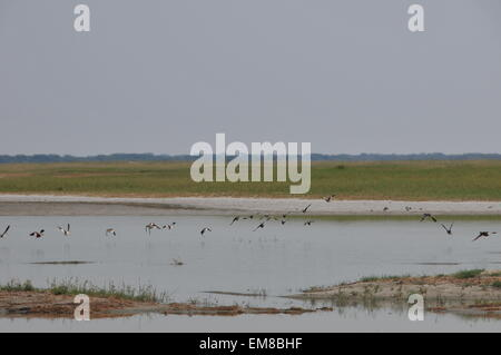 Makgadikgadi. 15th Apr, 2015. Photo taken on April 15, 2015 shows a view of Nata Bird Sanctuary of Makgadikgadi - Stock Photo