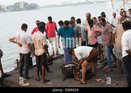 Fishermen bringing in and selling the days catch, Fort Kochi Kerala India - Stock Photo