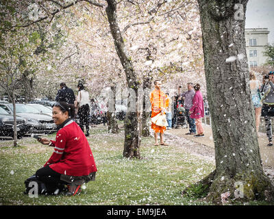 Washington DC 15-April 2015.  Blossoms fall from the tree like snow as People enjoy the last of the Cherry Blossoms - Stock Photo