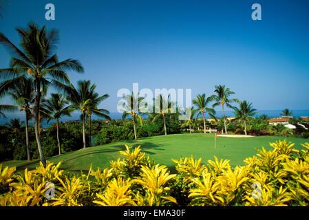 Hawaii, Big Island, Kailua-Kona, Kona Country Club, Green, Yellow Plants In Foreground - Stock Photo
