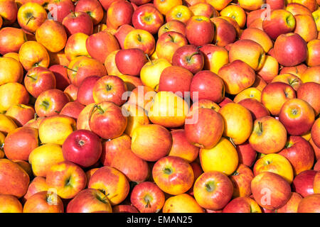 Red and yellow apples for sale at a market - Stock Photo