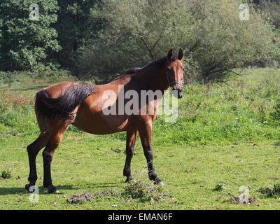 beauty horse on pasture - Stock Photo