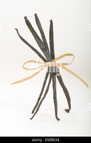 Four vanilla beans tied with wraphia with a bow standing up - Stock Photo