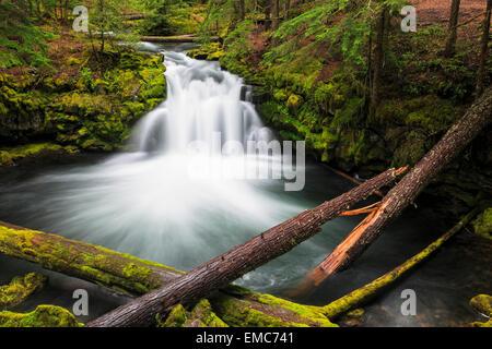 USA, Douglas County, Oregon, Umpqua River, Whitehorse Falls - Stock Photo