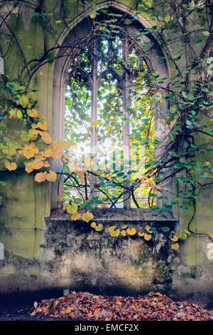 A Gothic window draped with ivy at St. Dunstan in the East Church garden in the City of London, UK. - Stock Photo