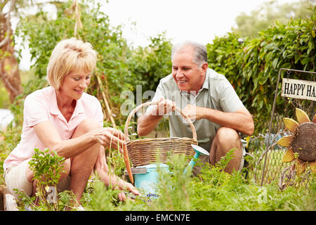 Senior Couple Working On Allotment Together - Stock Photo
