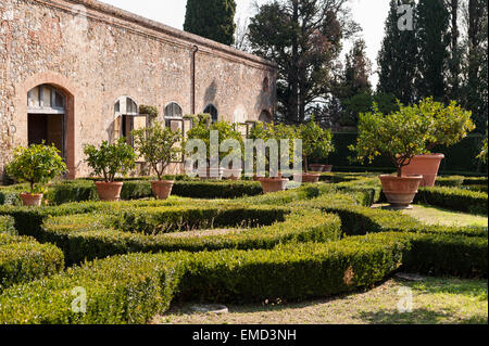 Vicobello, Siena, Tuscany, Italy. The formal Italian garden with clipped box hedges and pots of lemon trees outside - Stock Photo
