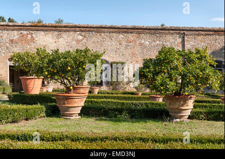 Vicobello, Siena, Tuscany, Italy. The formal Italian garden with clipped box hedges and pots of lemon trees outside - Stock Photo