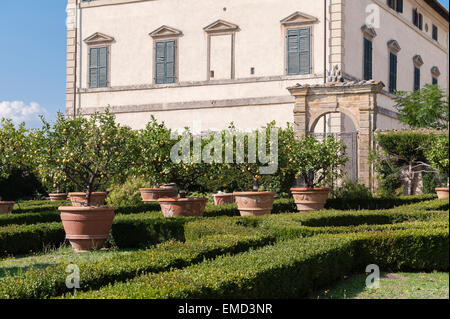 Vicobello, Siena, Tuscany, Italy. The formal Italian garden with clipped box hedges and terracotta pots of lemon - Stock Photo