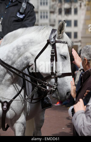 Police Horse in London Being stroked by tourists - Stock Photo