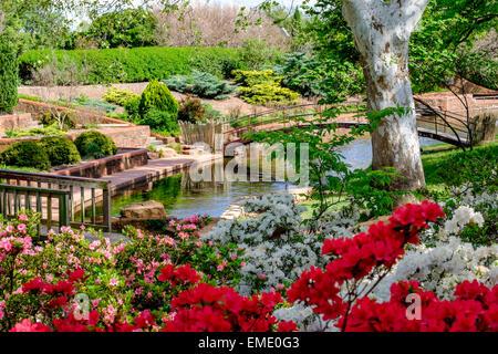 A beautiful scene with spring blooming Azaleas in a botanical garden in Oklahoma City, Oklahoma, USA, a public park. - Stock Photo