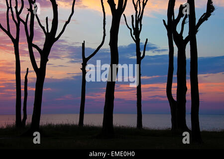 Sunset over the Baltic Sea seen through silhouetted beech trees at Ghost Wood / Gespensterwald at Nienhagen, Germany - Stock Photo