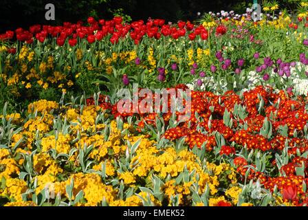 London, UK, 20 April 2015,  Bright April sunshine brings to life the vibrant colours of the flowers on St James - Stock Photo