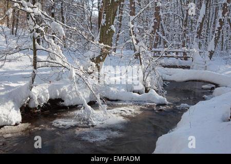 creek in winter forest in Little Carpathian hills - Slovakia - Stock Photo