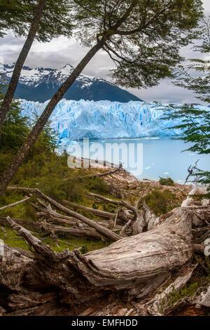 The Perito Moreno Glacier is a glacier located in the Los Glaciares National Park in Patagonia, Argentina. - Stock Photo