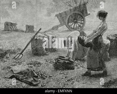 Agriculture. Mowing. Engraving, 19th century. - Stock Photo