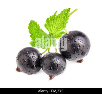 Black currant isolated on white background - Stock Photo