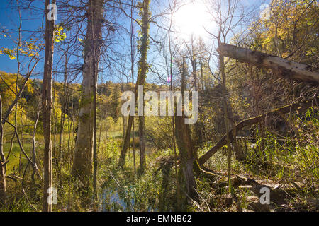 Jungle primeval forest in swamp of Plitvice lakes national park of Croatia - Stock Photo