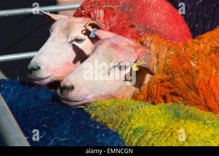 To celebrate the 10th anniversary of Latitude Festival the famous multi-coloured sheep travelled all the way from - Stock Photo