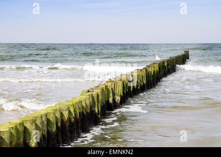 Breakwater with seagulls on the coast of the Baltic Sea in Germany - Stock Photo