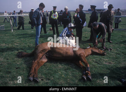 Dead race horse at the Grand National course, Aintree Had to be shot because of a bad fall. 1980s UK.  HOMER SYKES - Stock Photo