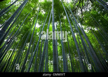 Bamboo forest, in Arashiyama, Kyoto, Japan - Stock Photo