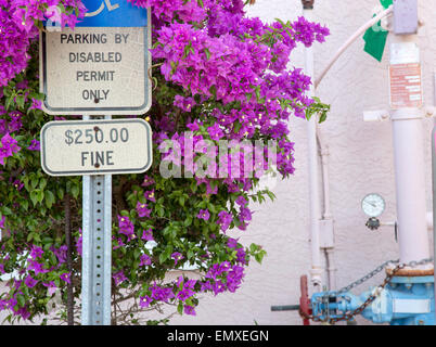 Handicapped parking permit sign surrounded by bougainvillea - Stock Photo