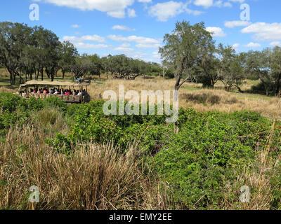 Tourists in safari vehicle watch wild animals at Disney Animal Kingdom, Orlando, Florida. - Stock Photo