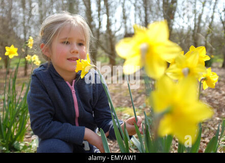 Young girl smelling flowers daffodils in the spring - Stock Photo