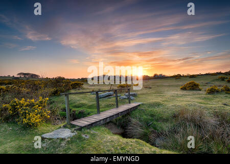 Sunset at a wooden foot bridge over a stream near St Breward on Bodmin Moor in Cornwall - Stock Photo