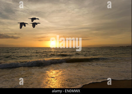 A flock of birds flying at sunset over the ocean waves. - Stock Photo