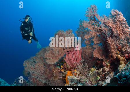 Scuba Diver over Coral Reef, Osprey Reef, Coral Sea, Australia - Stock Photo