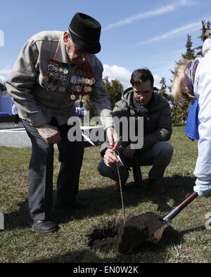 Moscow, Russia. 25th Apr, 2015. Volunteers plant lilac shrubs during the Lilac 1945-2015 event dedicated to the - Stock Photo