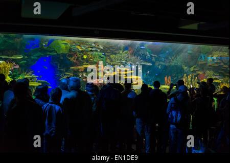 Tourist Attraction: Vibrant oasis in Rainbow Reef, Aquariums of Canada, Toronto. - Stock Photo
