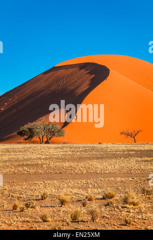 Dune 45 in afternoon light, Sossusvlei, Namibia. - Stock Photo