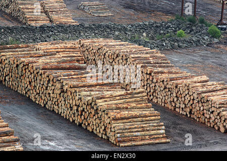 a pile of cut pine stacked in a timber yard - Stock Photo