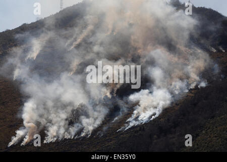 Controlled bush fire, near Lourdes, Hautes-Pyrenees, Pyrenees, France - Stock Photo