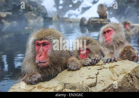 Snow monkeys in a natural onsen (hot spring), located in Jigokudani Park, Yudanaka. Nagano Japan. - Stock Photo