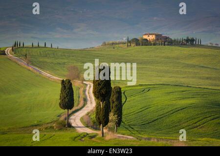 Cypress trees and winding road to villa near Pienza, Tuscany, Italy - Stock Photo