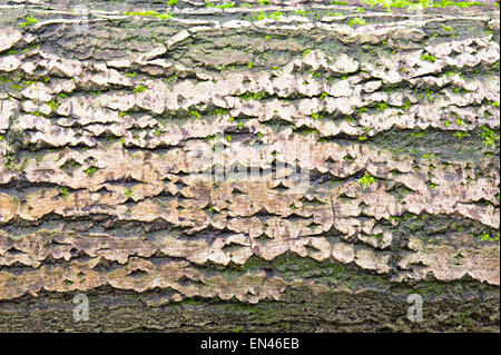 Detailed image of part of an old tree trunk with bark and moss - Stock Photo