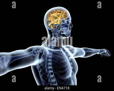 The human Brain. 3D rendered illustration. Isolated on black. - Stock Photo