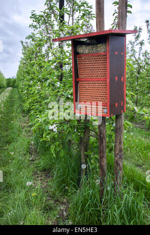 Insect hotel for solitary bees offering nest holes in flowering orchard in spring - Stock Photo