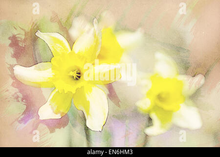 spring daffodils in garden, vintage retro watercolor effect - Stock Photo